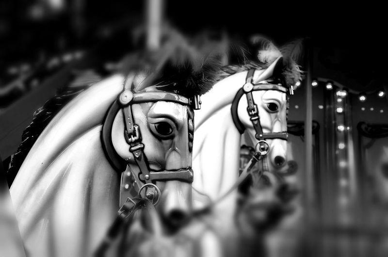 Horses Woodhorse Karussellpferd Karussell Funfair Blackandwhite Schwarzweiß Bnw_friday_eyeemchallenge Holzpferd Carousel Horse Carousel Funfair Ride Berliner Ansichten Horserace Monochrome Photography