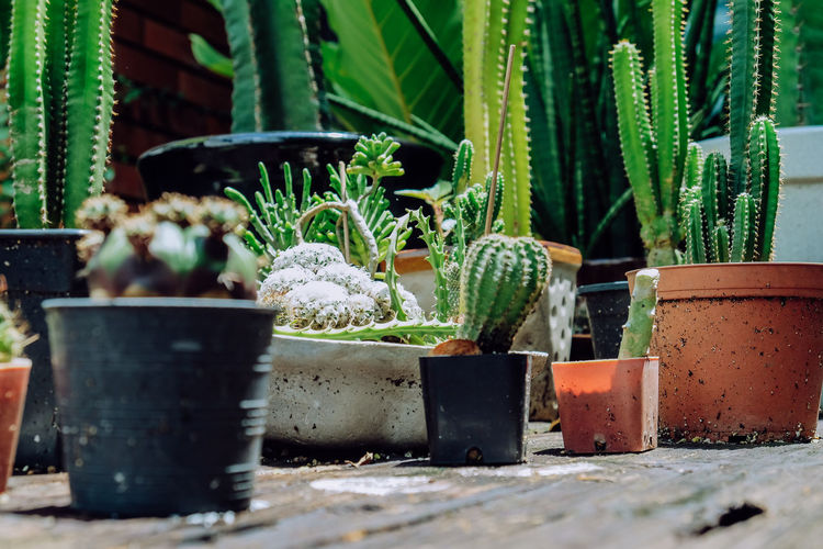 Close-up of succulent plants in yard