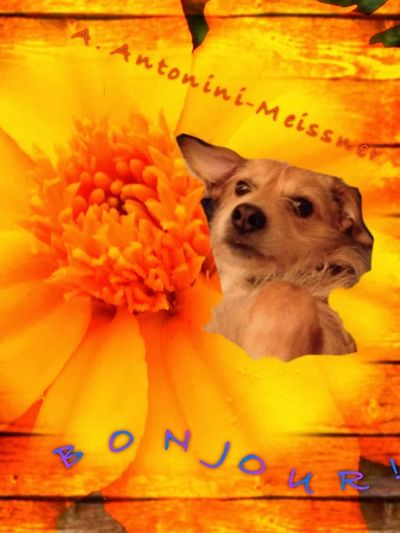 She's the only one that deserves my trust. She'll never break it! Now For Something Completely Different Natural Beauty Naturelovers Macro Nature Flower Collection Dogoftheday Love ♥ Collage Superimpose