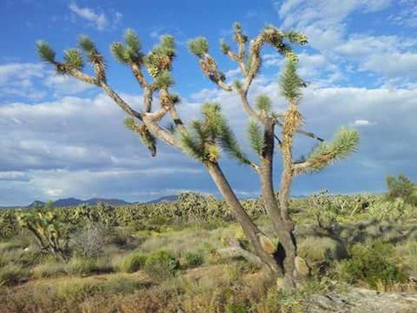 flowers Naturelovers I Love Cactus Cactus Flower