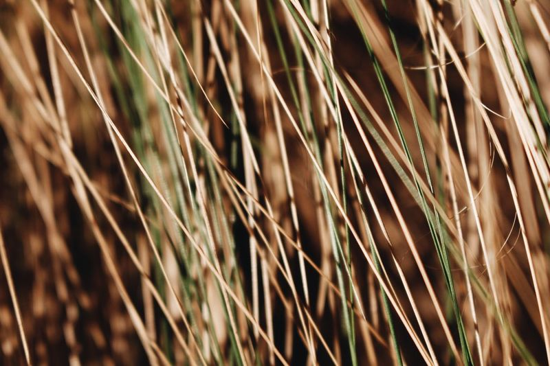 Growth Plant Close-up Day No People Nature Beauty In Nature Field Grass Selective Focus Land Sunlight Tranquility Agriculture Crop