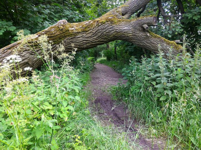 Nature Photography Green Green Grass Green Plants Path In The Woods Path Under Tree Bicycle Adventures Broken Tree Old Tree Under Laying Tree