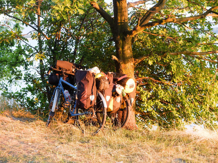 Adventure By Bike Animal Themes Beauty In Nature Bike Packing Bike Touring Day Field Growth Livestock Nature No People Outdoors Tree