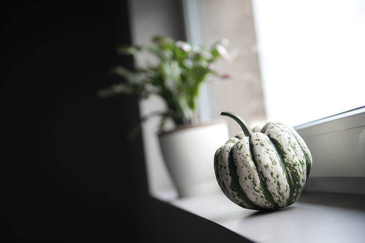 Pumpkin and potted plant on windowsill at home