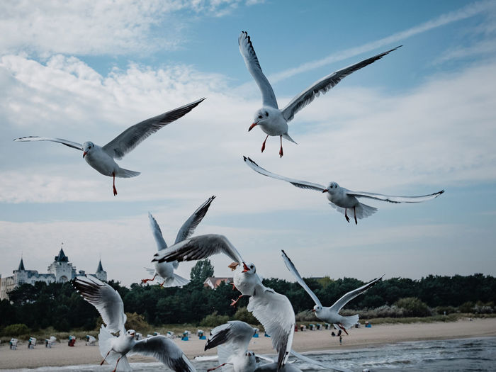 Ostsee Usedom, Germany Zinnowitz Animals In The Wild Beach Bird Cloud - Sky Flying Gul Nature No People Outdoors Sea Seagull Sky Usedom Water