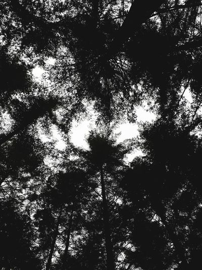 Forestier Forest Photography Canopee Tree Backgrounds Silhouette Full Frame Shadow Abstract Sky