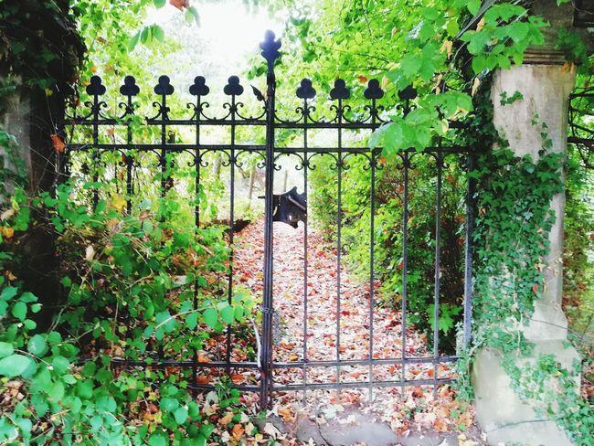 Ivy Protection Architecture Creeper Plant Entryway Closed Door Door Handle Overgrown