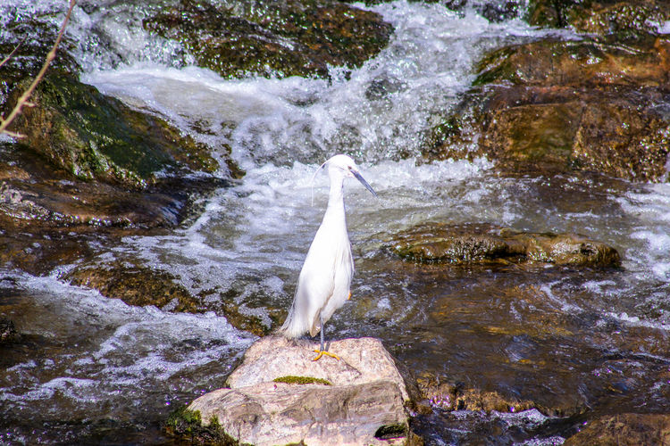 EyeEm Best Shots EyeEm Nature Lover EyeEmBestPics EyeEm Best Shots - Nature Beauty In Nature Wonders Of Nature Waterfall Fishing Bird Water Swimming High Angle View Great Egret Water Bird Flowing Water Egret