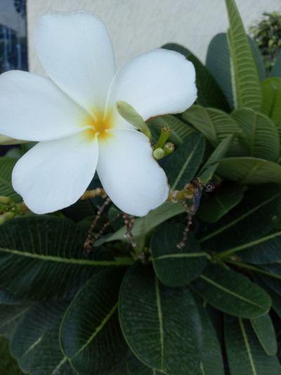 Nature Flower Taking Photos Relaxing Alandur Chennai