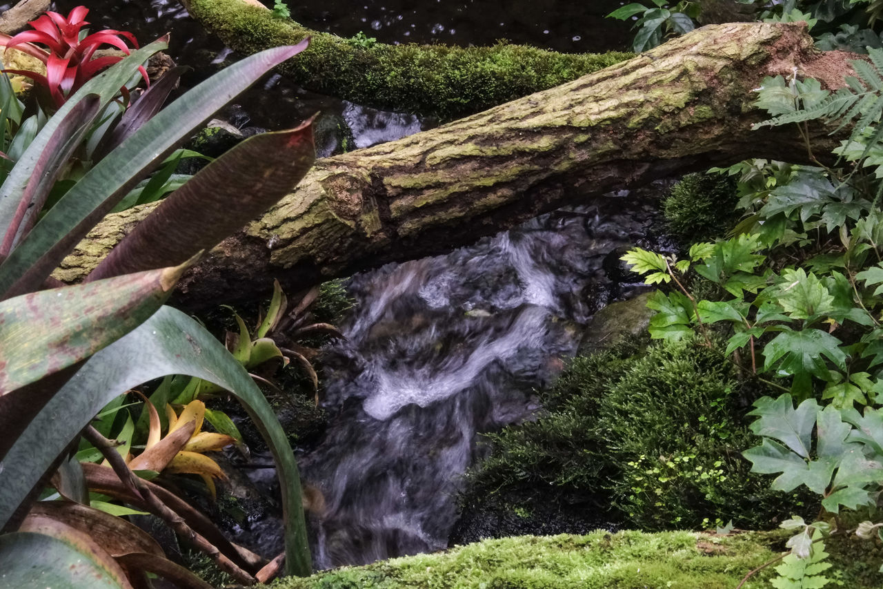 growth, plant, nature, no people, outdoors, tree, beauty in nature, green color, day, water, waterfall, freshness