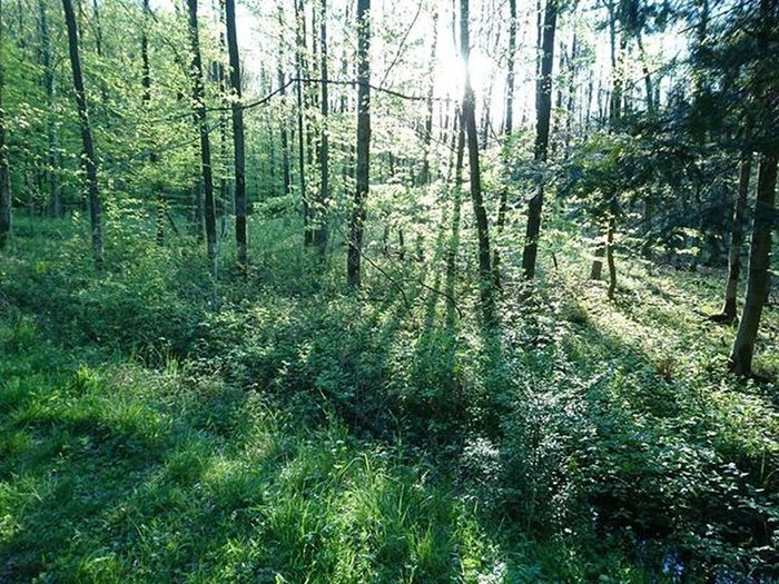 Forest Las Sun Słońce Naturephotography Nature_perfection Landscape Landscape_captures Iggermany Igersgermanyofficial Igersoftheday Ig_europe Ig_trees Shadow Shadows Instalike Instsize Instadaily Xperiaphoto Treeofinstagram Trees