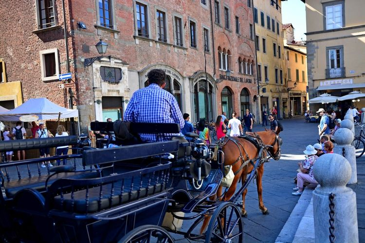 Lucca Italy Adult Architecture Building Exterior Built Structure City Day Group Of People Horse Cart Large Group Of People Leisure Activity Lifestyles Mammal Men Outdoors People Real People Rear View Sky Street Transportation Women