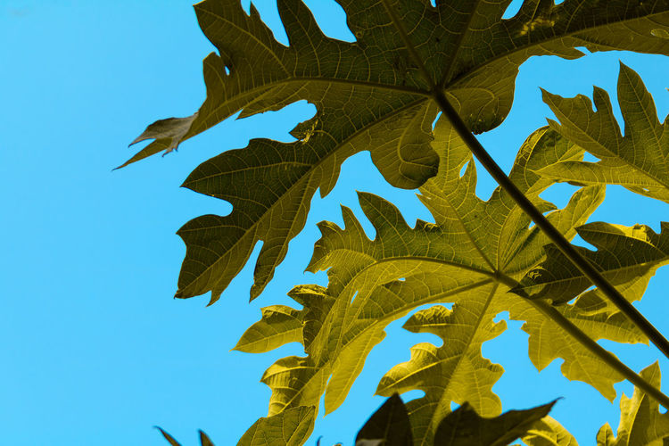 Low angle view of leaf against clear sky
