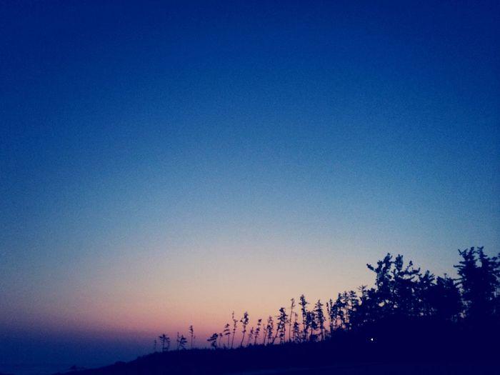 Rising Sun MIKUNI