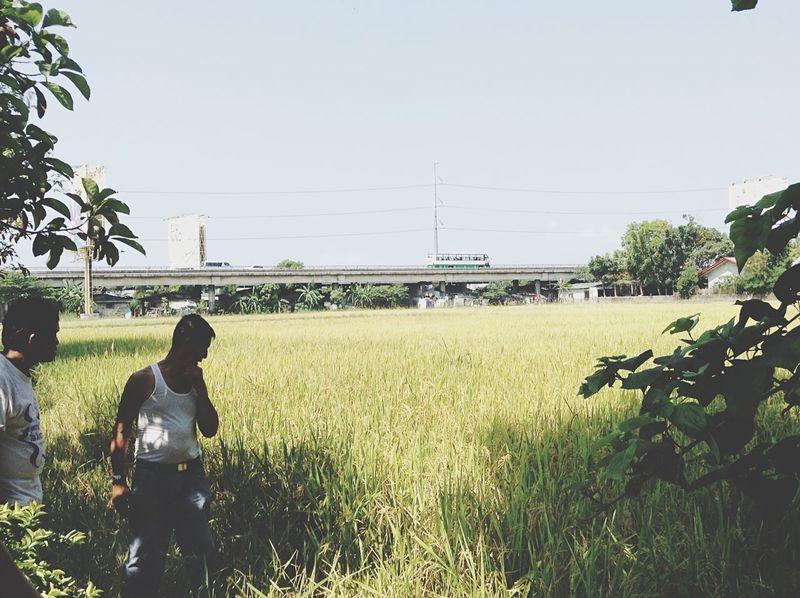 Nature Oldbridge Wilderness Ricefield