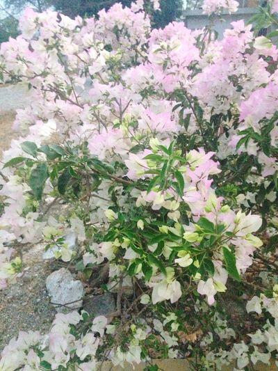 Nature Primavera