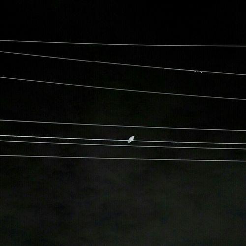 Solo Flight Blackandwhite Claunch 72 Monochrome Film Birds Black & White Popular Monochrome Streetphoto_bw Monoart Eye4photography  EyeEm Birds Streetphotography