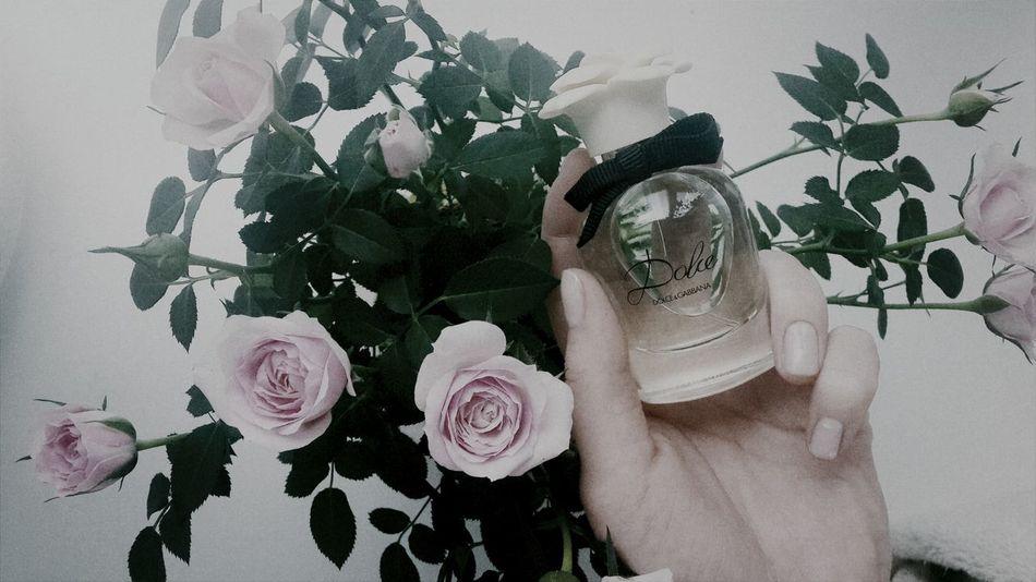 Roses Parfume D&G Dolcé
