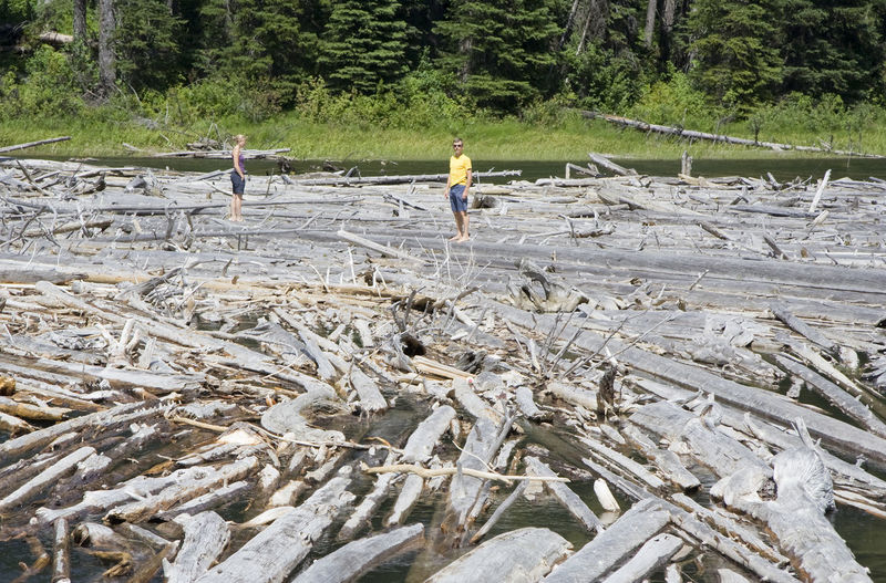Man And Woman Standing Amidst Driftwoods At Duffey Lake Provincial Park