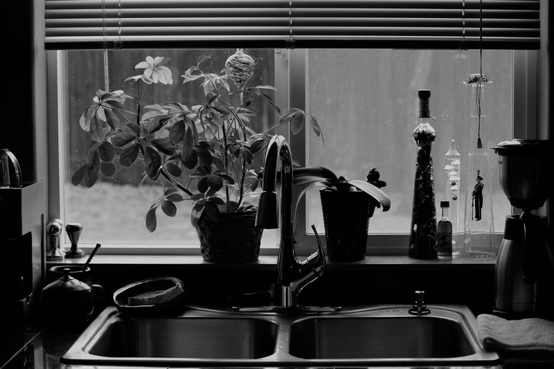 Potted plants on window sill in kitchen