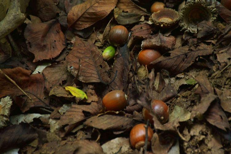 Fall Beauty EyeEm Nature Lover Acorn Autumn Colors Dead Leaves