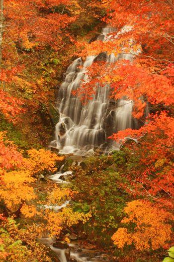 紅葉 滝 Autumn