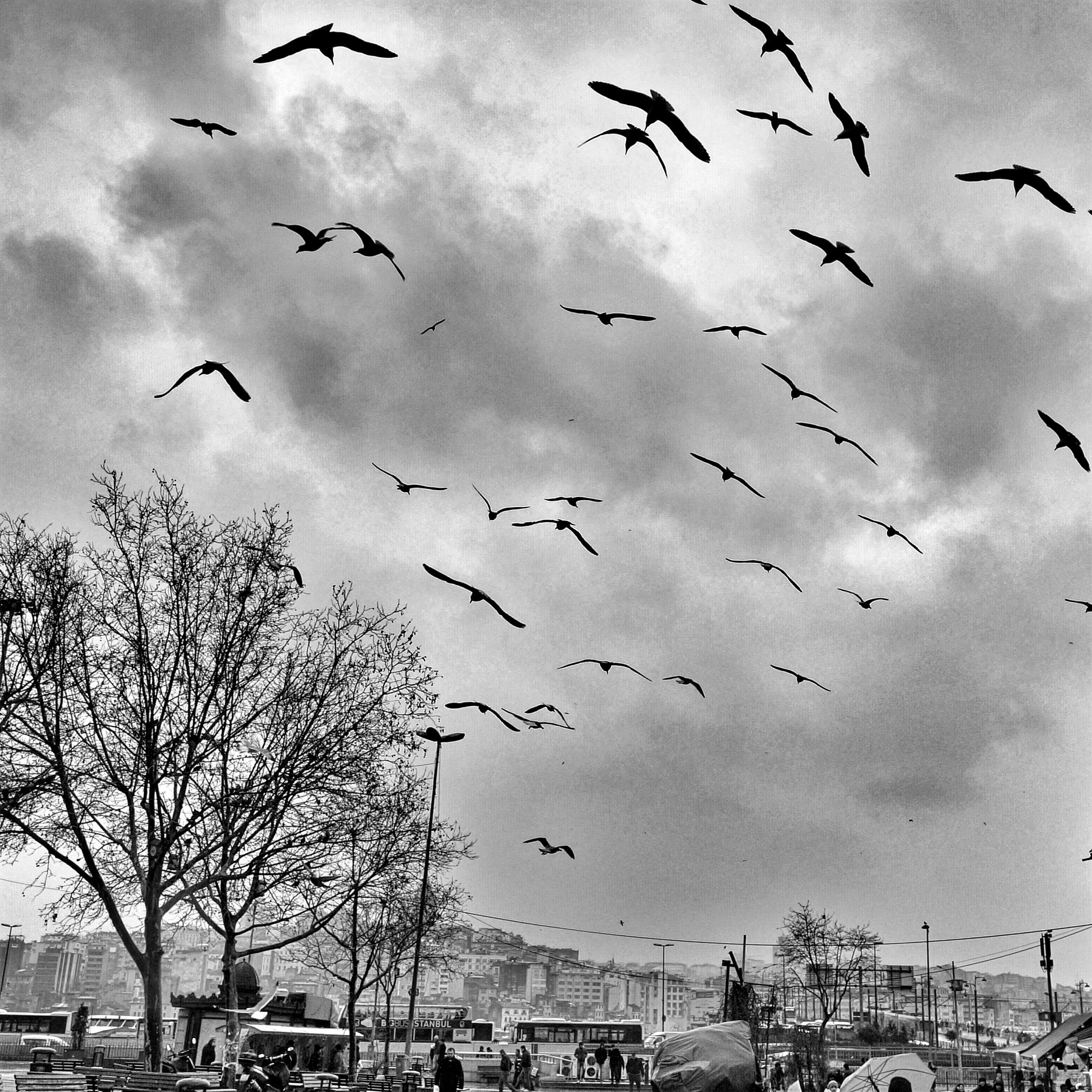 bird, flying, animals in the wild, animal themes, flock of birds, wildlife, sky, building exterior, built structure, low angle view, architecture, cloud - sky, city, day, transportation, mid-air, outdoors, spread wings, cloud