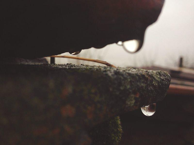 Raindrops Raindropshot November Winteriscoming Rime