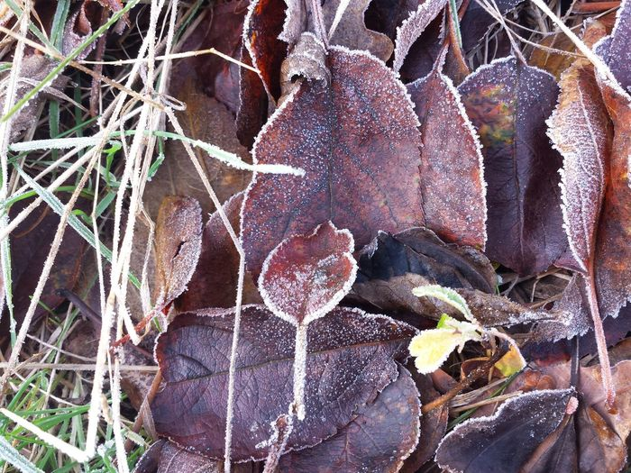 Close-up Leaves On The Ground Ladyphotographerofthemonth Beautiful View Full Frame Autumn Colours Ice Capped Iced Cold Temperature Icy Cold Bunte Blätter Kleines Blatt Ice Capped, Small Leave vs Big Leave, Comparison Laub Laubfärbung Still Life Stillleben