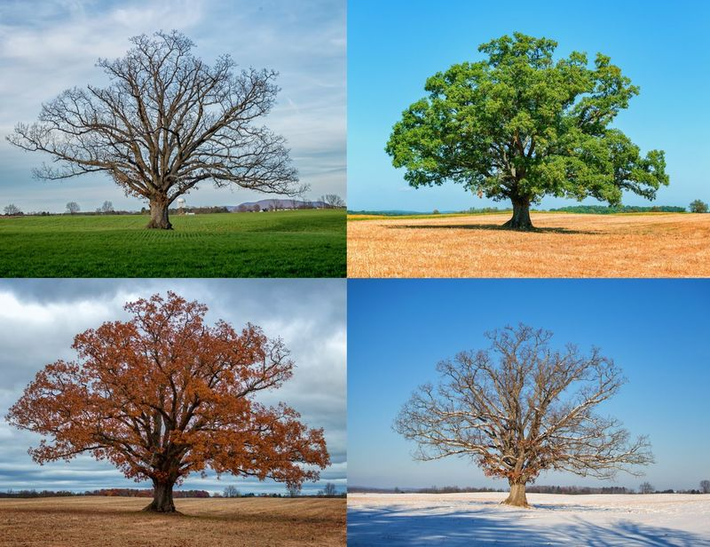 Seasons CIRCLE Of LIFE Tree Oak Tree Tree Autumn Single Tree Leaf Nature Sky Plant Beauty In Nature Deciduous Tree No People Outdoors Scenics
