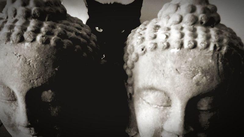 Mon chat chamamow ,entre les budhas Lille