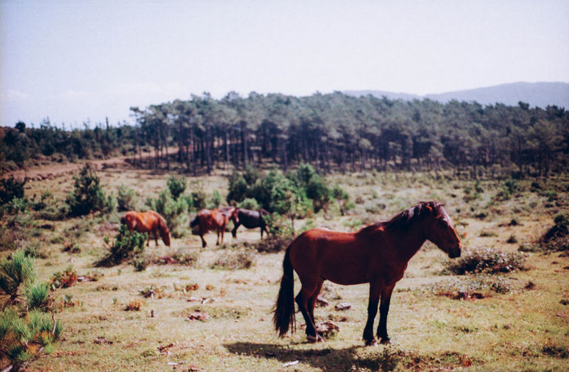 Brown Green Landscape Nature Rolling Stones Tranquil Scene Wild Animals Wild Horses