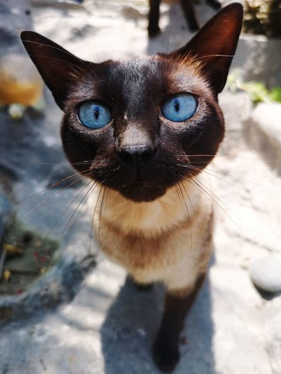 Sky in you eyes Pets Portrait Looking At Camera Domestic Cat Eye Close-up Animal Eye Cat Animal Face First Eyeem Photo