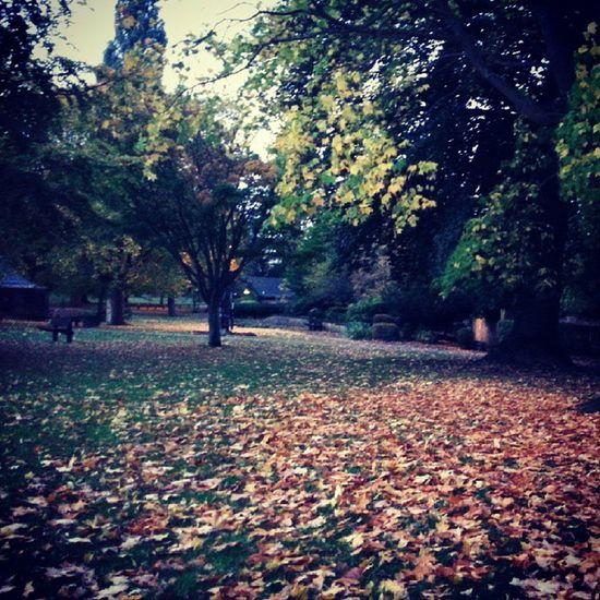 Autumn in Banbury - people's park October