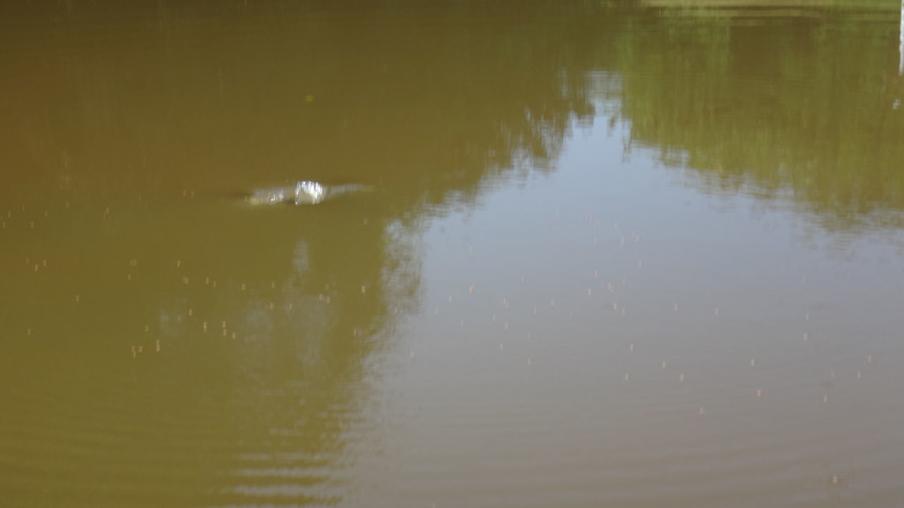 reflection, water, no people, lake, waterfront, outdoors, nature, day, animals in the wild, animal themes, close-up