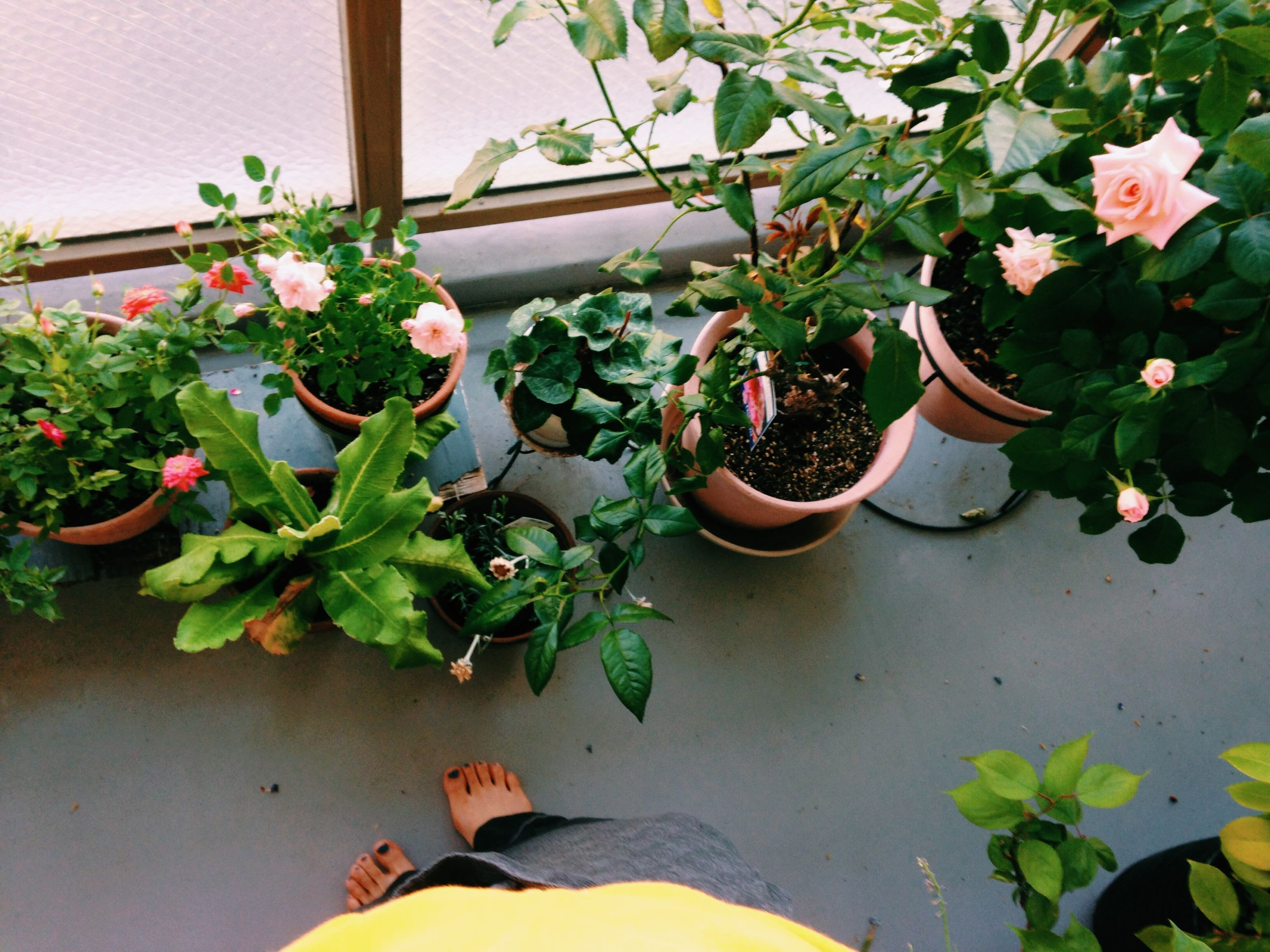 leaf, plant, potted plant, growth, indoors, flower, wall - building feature, high angle view, green color, nature, no people, built structure, wall, day, front or back yard, freshness, fragility, pot plant, flower pot, decoration