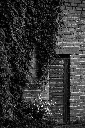 Viljandi streets Black & White City Contrast And Lights Empty Streets Estonia Viljandi Järv WeekOnEyeEm Architecture Blackandwhite Building Exterior Built Structure Contrast Darkness And Light Day Empty Road Europe Monochrome No People Old Buildings Outdoors Plants On The Wall Street Urban