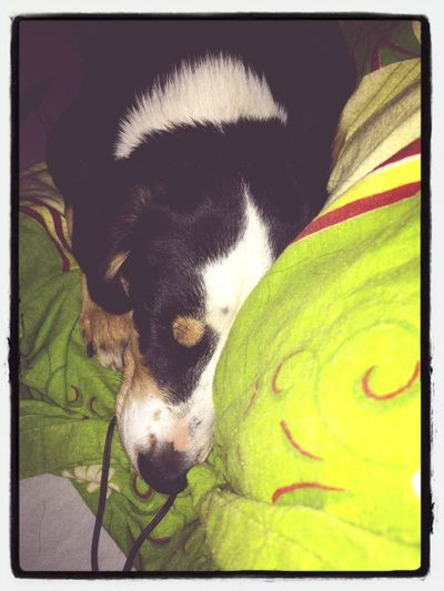 Taking Photos Check This Out My Dog Night Night