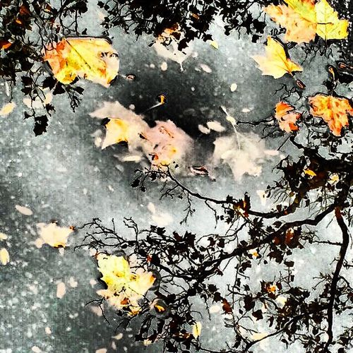 autumn puddle with leaves Autumn Beauty In Nature Branch Change Day Leaf Nature No People Outdoors Puddle Reflection Season