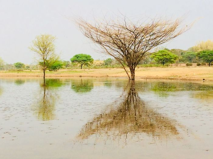 Love nature Tree Tranquility Scenics Tranquil Scene Lone Nature Beauty In Nature Remote Reflection Non-urban Scene Water Landscape Bare Tree No People Day Outdoors Branch Sky