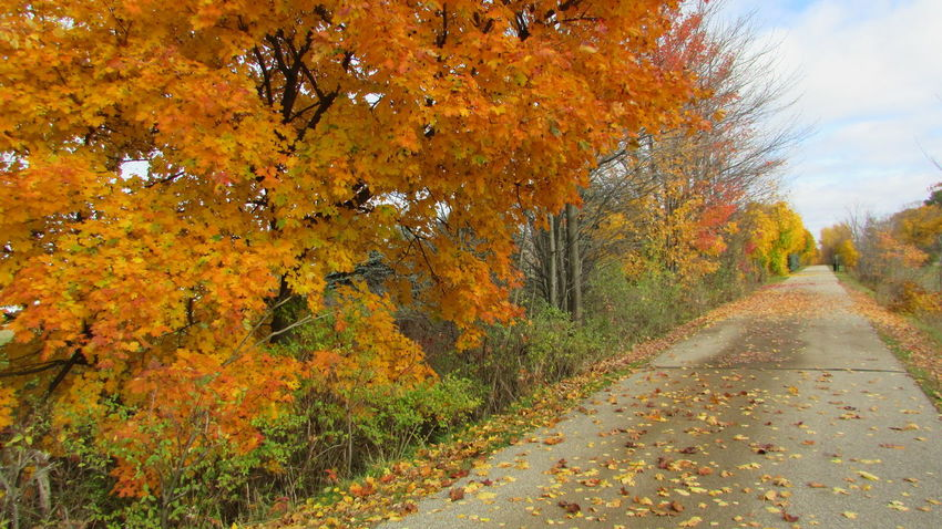 Fall Colors Down The Trail Bright_and_bold Oranges And Yellows Serenity Enjoying The Quiet Cool Angle White Pine Trail Cadillac Michigan