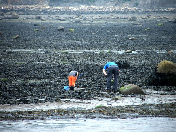 Beach Combing Beauty In Nature Crabbing Day Father And Son Fishing Holiday Lifestyles Mammal Nature Outdoors Rockpooling Rockpools Running Seaside Shore Summer Tranquility Vacation Water