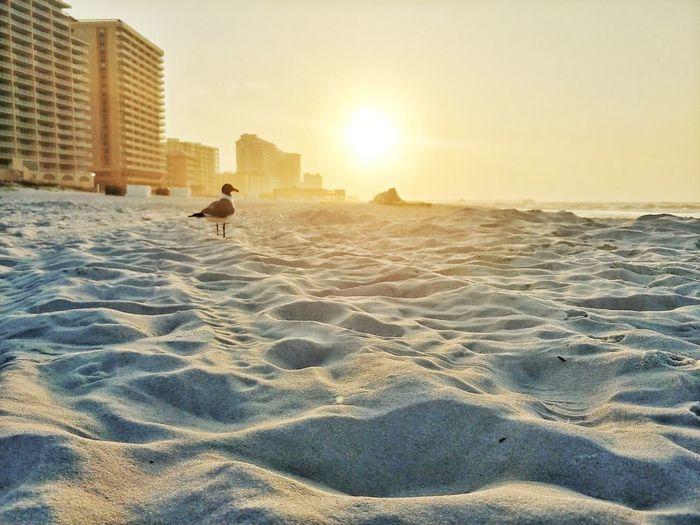 lonely seagull Sunset Beach Sand Sunrise Urban Skyline Skyscraper Bird Sunlight Sitting Sky Shining Sun