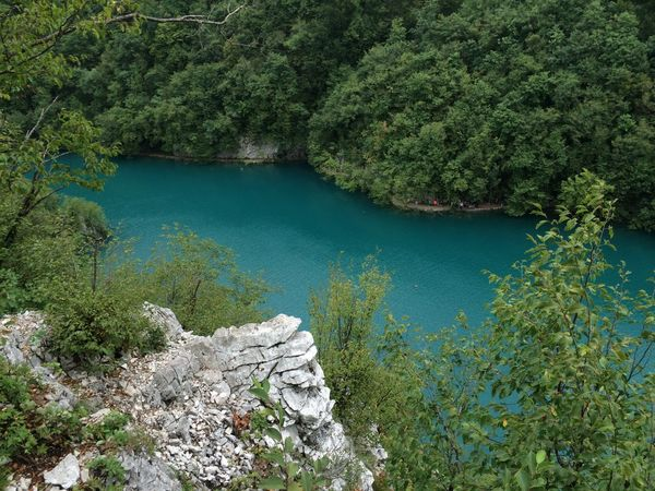 Beauty In Nature Day Forest Green Green Color Lake Lush Foliage Majestic Nature Outdoors Physical Geography Plitvice National Park Remote River Scenics Stream Tranquil Scene Tranquility Tree Water