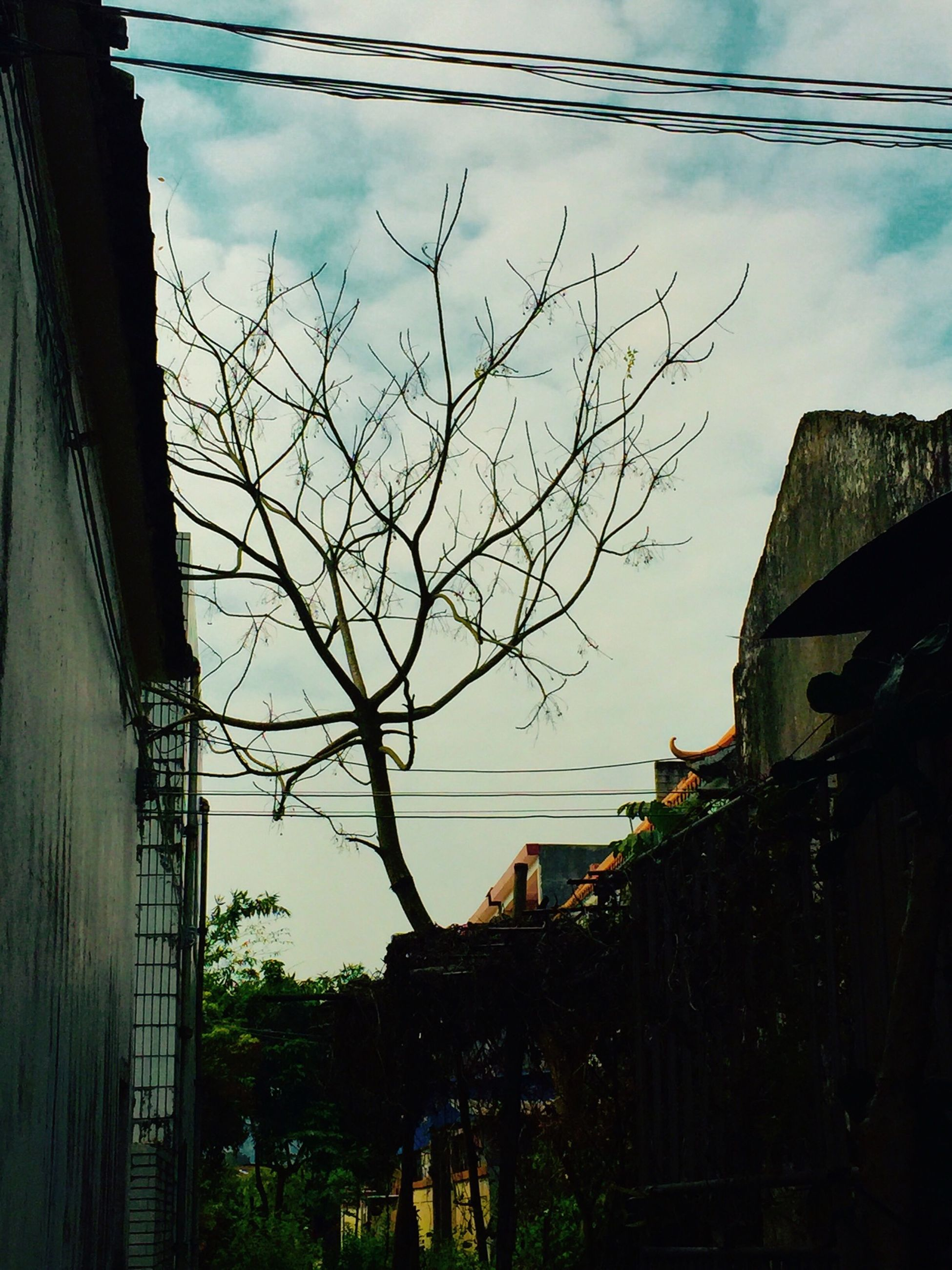 building exterior, architecture, built structure, sky, house, residential structure, residential building, cloud - sky, cloud, tree, building, bare tree, power line, town, city, residential district, outdoors, cable, no people, day