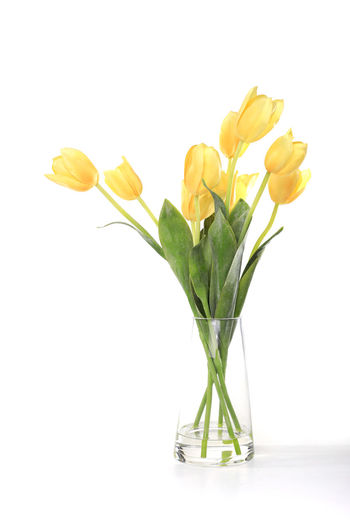 Close-up of yellow tulips in vase against white background