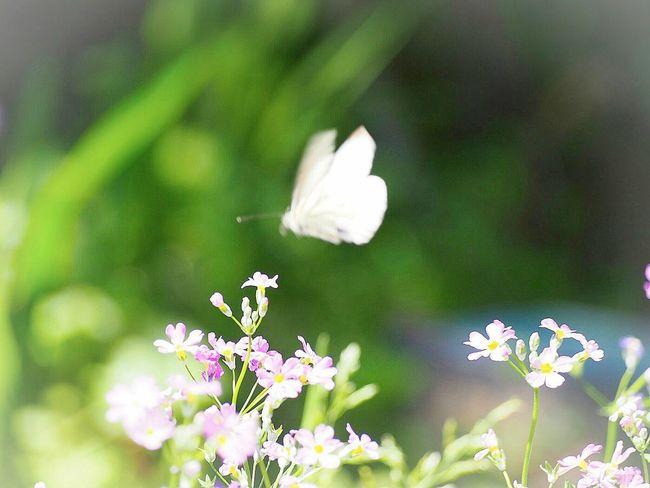 チョウチョも喜ぶお天気♪ Springtime Butterfly Butterfly - Insect EyeEm Nature Lover EyeEm Best Shots 日だまり 蝶々 EyeEm Gallery Eyemphotography EyeEm Best Shots - Nature Taking Photos