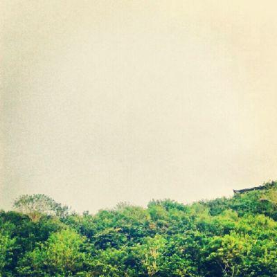 green force Green Goesgreen Enviroment Climate Earth Natgeo Discoverychannel Habitat Trees Wood Forest Kalimantan Leaves Instanusantara Instanusantarabali Instanesia Instagood Instadaily Picoftheday Photooftheday Samsung IGDaily Bali INDONESIA LangitBaliPhotowork