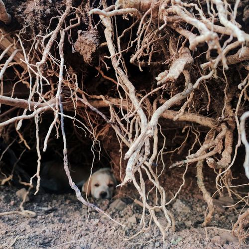 Close-up of dead plant in nest