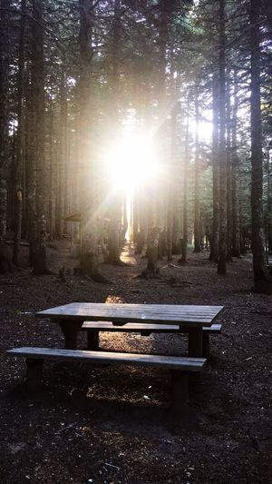 King of the forest Tree Plant Sunlight Sunbeam Nature Forest Transportation Sun Land Beauty In Nature Tranquility Lens Flare No People Growth Road Day Sky Tranquil Scene Mode Of Transportation Outdoors